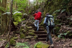 Grand Canyon track, Blue Mountains National Park